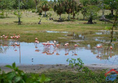 flamingos-el-cuyo