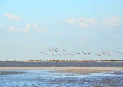 el-cuyo-birds